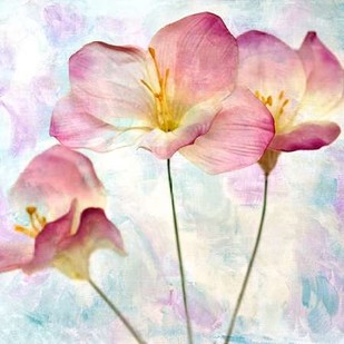 Pink Hyacinth IV Digital Print by Malek, Honey,Decorative