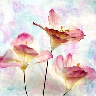 Pink Hyacinth VI Digital Print by Malek, Honey,Decorative, Impressionism