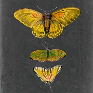 Butterflies on Slate I Digital Print by McCavitt, Naomi,Decorative