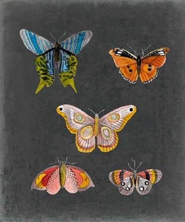 Butterflies on Slate II Digital Print by McCavitt, Naomi,Decorative