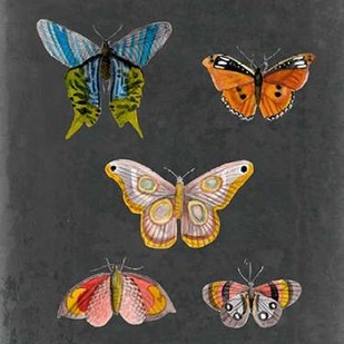 Butterflies on Slate II Digital Print by McCavitt, Naomi,Decorative