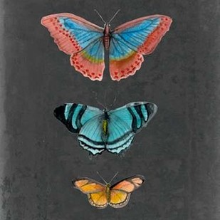 Butterflies on Slate III Digital Print by McCavitt, Naomi,Decorative
