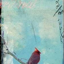 Bird Window I Digital Print by Blixt, Ingrid,Impressionism