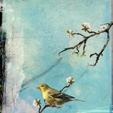 Bird Window II Digital Print by Blixt, Ingrid,Impressionism
