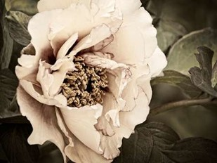 Golden Era Peony I Digital Print by Perry, Rachel,Decorative, Photorealism