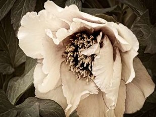 Golden Era Peony III Digital Print by Perry, Rachel,Decorative, Photorealism