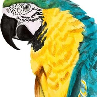 Watercolor Parrot Digital Print by McCavitt, Naomi,Decorative
