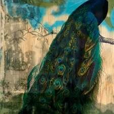 Rustic Peacock I Digital Print by Goldberger, Jennifer,Impressionism