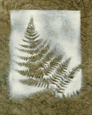Shadows & Ferns II Digital Print by Stramel, Renee W.,Decorative