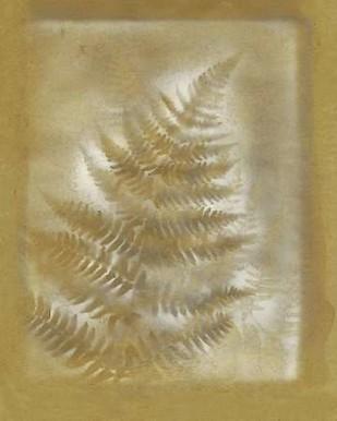 Shadows & Ferns III Digital Print by Stramel, Renee W.,Decorative