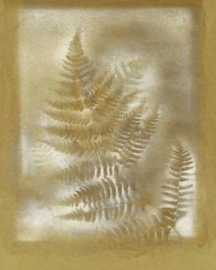 Shadows & Ferns IV Digital Print by Stramel, Renee W.,Decorative