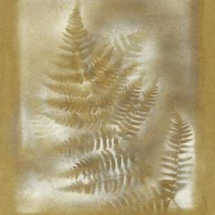Shadows & Ferns IV Digital Print by Stramel, Renee W.,Decorative