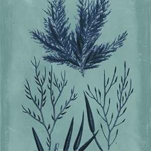 Indigo & Azure Seaweed I Digital Print by Vision Studio,