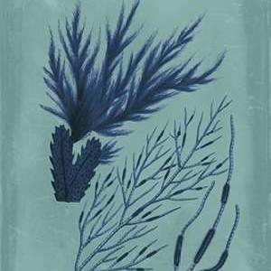 Indigo & Azure Seaweed II Digital Print by Vision Studio,Decorative