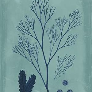 Indigo & Azure Seaweed V Digital Print by Vision Studio,Decorative
