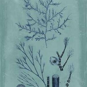 Indigo & Azure Seaweed VIII Digital Print by Vision Studio,Decorative