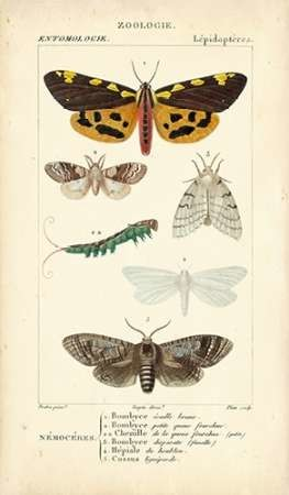 Antique Butterfly Study I Digital Print by Turpin,Decorative