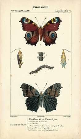 Antique Butterfly Study II Digital Print by Turpin,Decorative