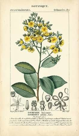 Botanique Study in Yellow II Digital Print by Turpin,Decorative