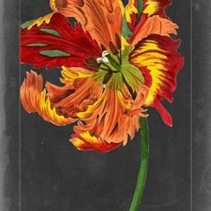 Midnight Tulip I Digital Print by Vision Studio,Decorative