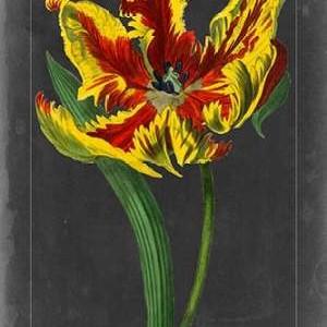 Midnight Tulip III Digital Print by Vision Studio,Decorative
