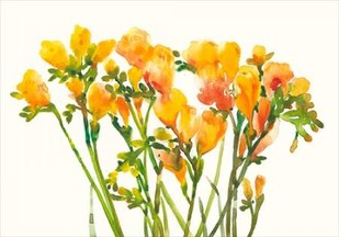Freesia II Digital Print by Otoole, Tim,Impressionism