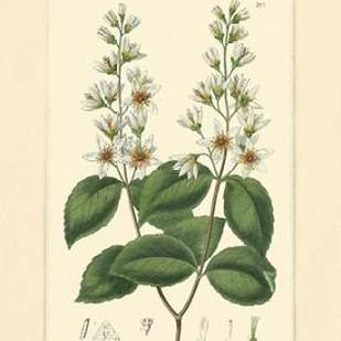 White Curtis Botanical II Digital Print by Vision Studio,Art Deco