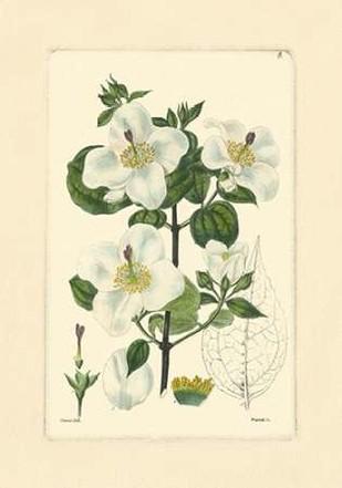 White Curtis Botanical III Digital Print by Vision Studio,Art Deco