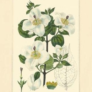 White Curtis Botanical III Digital Print by Vision Studio,Art Deco