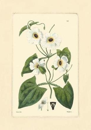 White Curtis Botanical IV Digital Print by Vision Studio,Art Deco