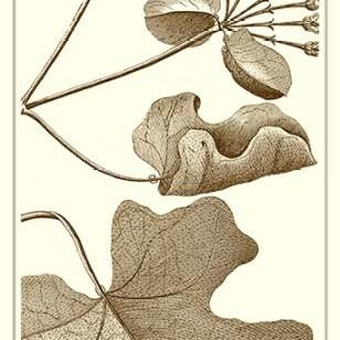 Cropped Sepia Botanical I Digital Print by Vision Studio,Decorative