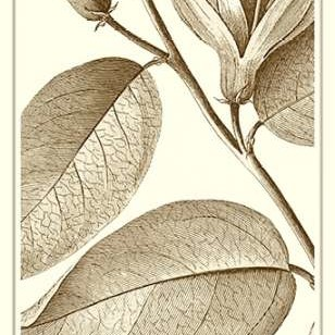 Cropped Sepia Botanical II Digital Print by Vision Studio,Illustration
