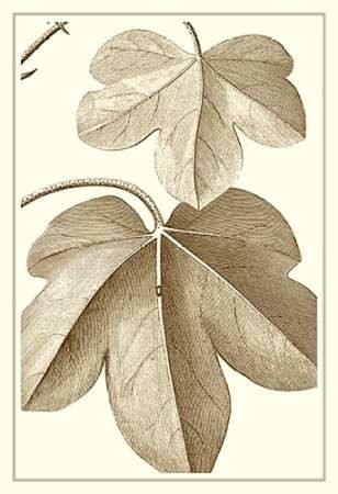Cropped Sepia Botanical III Digital Print by Vision Studio,Decorative