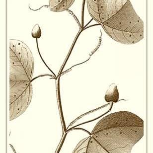 Cropped Sepia Botanical IV Digital Print by Vision Studio,Illustration