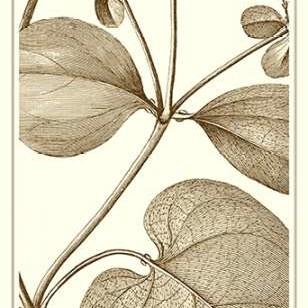 Cropped Sepia Botanical V Digital Print by Vision Studio,Illustration