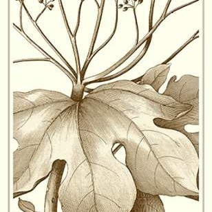 Cropped Sepia Botanical VI Digital Print by Vision Studio,Decorative