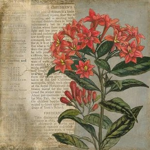 Vintage Fleur Rouge II Digital Print by Meagher, Megan,Decorative