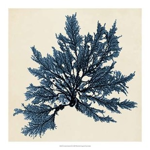Coastal Seaweed IX Digital Print by Vision Studio,Decorative