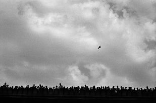 Flight Of Freedom 01 by Sandeep Biswas, Image Photograph, Digital Print on Archival Paper, Gray color