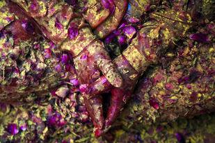 A Prayer Of Color by Udit Kulshrestha, Image Photography, Digital Print on Archival Paper, Brown color