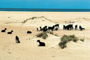 Coasts Of India 28 by Ashwin Mehta, Image Photography, Digital Print on Paper, Beige color