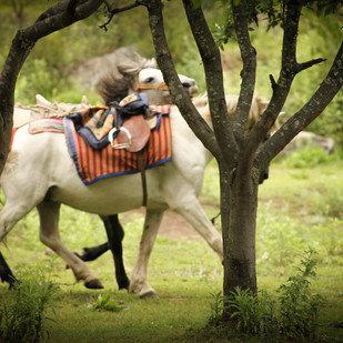 Horse by Prapti Mittal, Image Photograph, Digital Print on Paper, Green color
