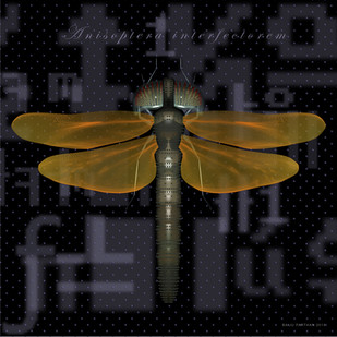 Process D – Dragonfly (Anisoptera Interfectorem) by Baiju Parthan, Digital Digital Art, Digital Print on Archival Paper, Black color