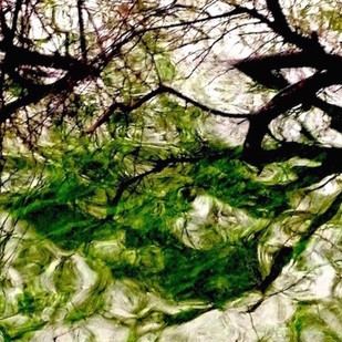 Walking In Deer Park 1 by Saba Hasan, Image Photograph, Digital Print on Archival Paper, Green color