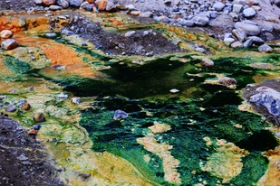 Nature Abstract 2 by Krishnendu Chatterjee, Image Photograph, Digital Print on Archival Paper, Green color