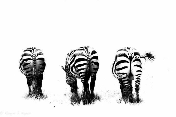 Bottoms Up by Runjiv J. Kapur, Image Photograph, Digital Print on Canvas, White color