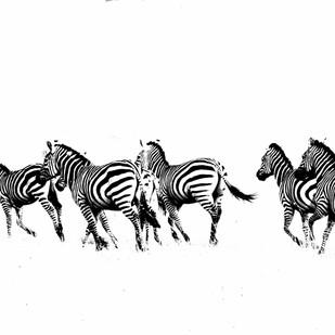 Zebras On The Run by Runjiv J. Kapur, Image Photograph, Digital Print on Canvas, White color