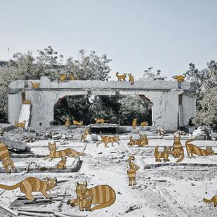 Feral Cats by Mansi Shah - Vishal Mehta, Digital Digital Art, Digital Print on Archival Paper, Gray color