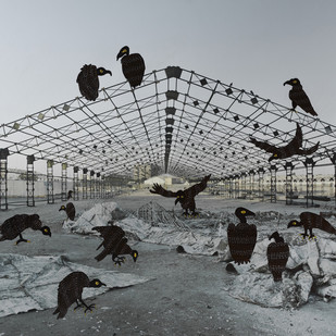 Vultures: Environment Cleaners by Mansi Shah - Vishal Mehta, Image Photograph, Digital Print on Archival Paper, Gray color