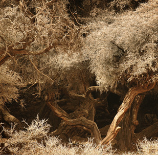 Ladakh: Magical Orchard by Anirban Dutta Gupta, Image Photograph, Digital Print on Enhanced Matt, Brown color